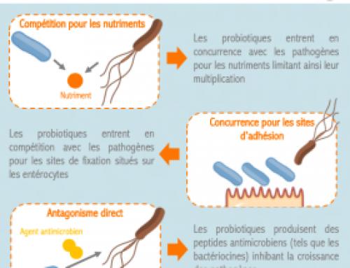 Infographie – Quels sont les mécanismes d'action des probiotiques contre les pathogènes ?