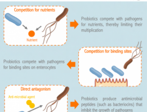 Infographic – What are the mechanisms of action of probiotics against pathogens?